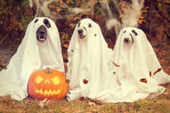 Don't Scare Your Pets To Death This Hallowe'en!