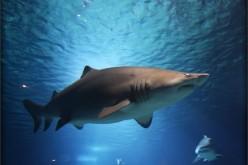 Loan Shark or Fair Lender?