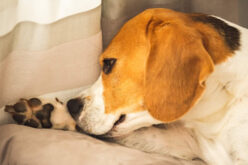 How To Help Your Dog Cope with Stressful Situations
